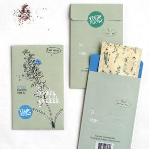 Campanula seeds